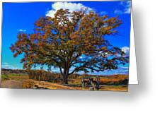 The Devils Den Witness Tree. Greeting Card by Dave Sandt