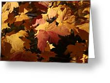 The Golden Days Of October Greeting Card by Lyle Hatch
