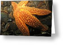 The Great Starfish Greeting Card by Paul Ward
