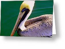 The Happy Pelican Greeting Card by Karen Wiles