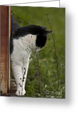 The Hunt Greeting Card by Kim Henderson