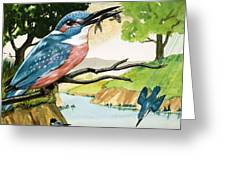 The Kingfisher Greeting Card by D A Forrest