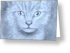The Kitten Greeting Card by Jack Skinner