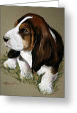 The Little Basset Greeting Card by Mary Sparrow