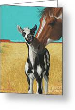 The Little Mustang Greeting Card by Tracy L Teeter