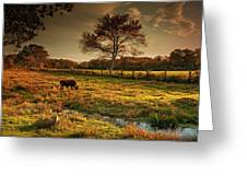 The Lone Grazer Greeting Card by Robin-lee Vieira