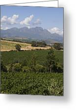 The Lush Garden Landscape Of A Vineyard Greeting Card by Stacy Gold
