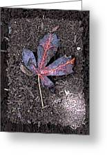 The Maple 5 Greeting Card by Tim Allen