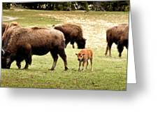The Mighty Bison Greeting Card by Ellen Heaverlo
