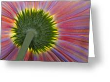 The Other Side Greeting Card by Susan Candelario