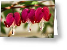 The Red Heart Greeting Card by Robert Bales
