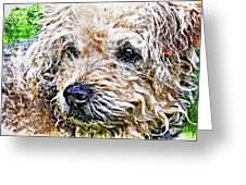 The Scruffiest Dog In The World Greeting Card by Meirion Matthias