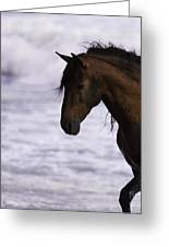 The Stallion And The Ocean Greeting Card by Carol Walker
