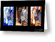 The Three Zebras Black Borders Greeting Card by Rebecca Margraf