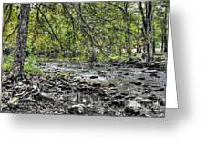 The Trout Stream Greeting Card by Dan Stone