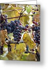 The Vineyard Greeting Card by Linda Mishler