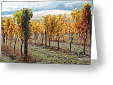 The Vineyard Greeting Card by Margaret Hood