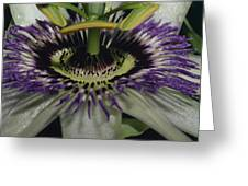 The Vivid Purple And Intricate Greeting Card by Jason Edwards
