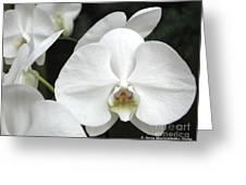 The Whiter Shade Of... Greeting Card by Anna Folkartanna Maciejewska-Dyba