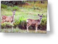 The Yearlings Greeting Card by Lana Trussell