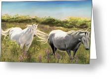 Thelma And Louise Connemara Ponies Greeting Card by Vanda Luddy