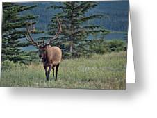This Is Alberta No.19 - Taking A Stroll Greeting Card by Paul W Sharpe Aka Wizard of Wonders