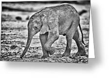 This Is Botswana No.  6 - Wait Up Mother Greeting Card by Paul W Sharpe Aka Wizard of Wonders