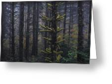 This Is British Columbia No.54 - Misty Mystical Moss Forest II Greeting Card by Paul W Sharpe Aka Wizard of Wonders