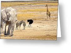This Is Namibia No. 10 - Etosha White African Elephant Greeting Card by Paul W Sharpe Aka Wizard of Wonders