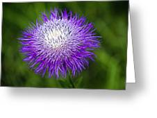 Thistle II Greeting Card by Tamyra Ayles