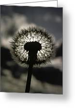 Thoreau Called A Dandelion A Complete Greeting Card by Farrell Grehan
