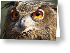 Those Eyes Greeting Card by Paulette Thomas