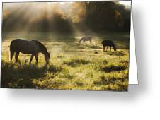 Three Horse Sunrise Greeting Card by Ron  McGinnis