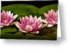Three Water Lilies Greeting Card by Susan Candelario