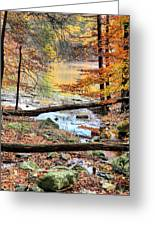 Through The Trees Greeting Card by JC Findley