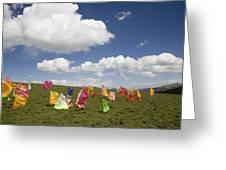 Tibetan Prayer Flags In A Field Greeting Card by David Evans