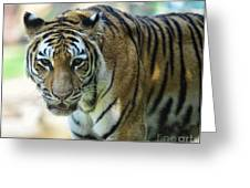Tiger - Endangered - Wildlife Rescue Greeting Card by Paul Ward