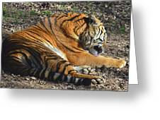 Tiger Behavior Greeting Card by Sandi OReilly