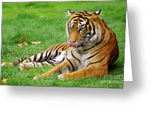 Tiger Greeting Card by Carlos Caetano