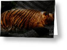 Tiger Dreams Greeting Card by Kathi Shotwell