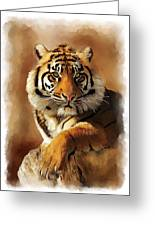 Tiger Portrait Greeting Card by Michael Greenaway