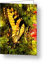 Tiger Swallowtail Butterfly Happily Feeds Greeting Card by J Larry Walker