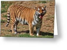 Tiger Yawn Greeting Card by Alexander Spahn