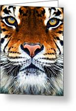 Tiger's Face Greeting Card by Helen Stapleton