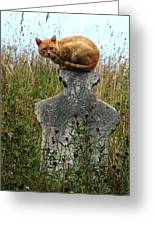 Tombstone Cat Greeting Card by Still Watters