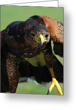 Top Raptor Greeting Card by Skip Willits