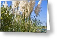 Topsail Grasses Greeting Card by Betsy C  Knapp