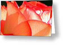 Touch Of Rose Greeting Card by Karen Wiles