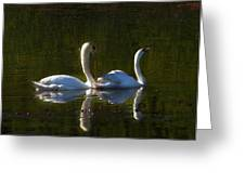 Tranquility Greeting Card by Barbara  White