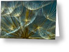 Translucid Dandelions Greeting Card by Iris Greenwell